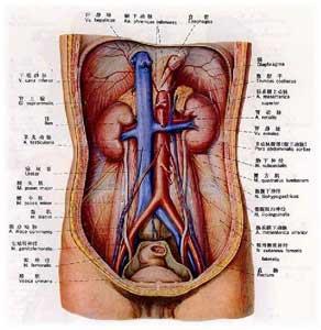 女性尿道较短 容易招致上行感染